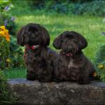 029_Munroe dogs